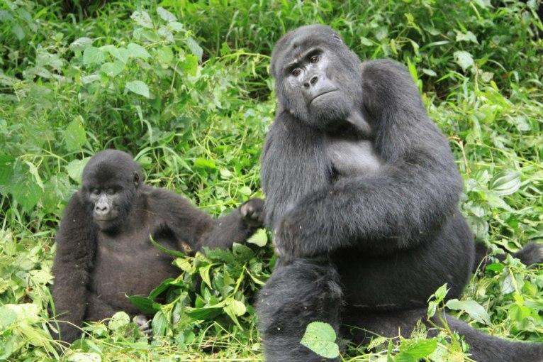 http://gorillalandsafaris.blogspot.nl/