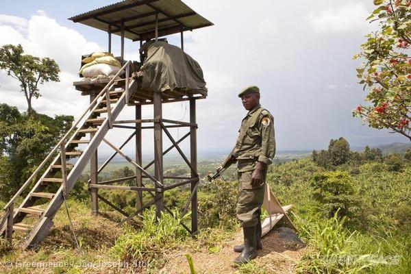 ICCN Ranger in Virunga National ParkICCN Bewaker in Virunga National Park