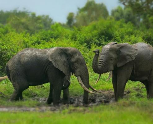 Elephant avec B à Mabenga-2