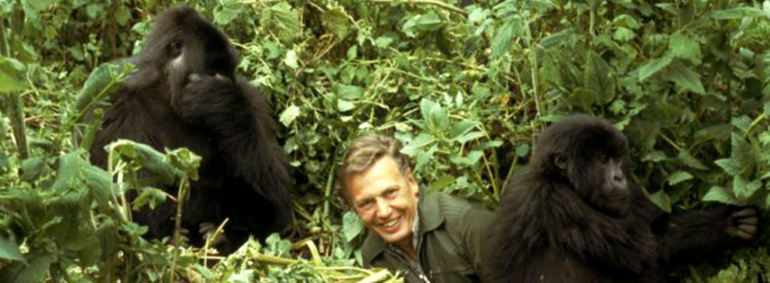 http://www.independent.co.uk/environment/nature/sir-david-attenborough-facing-new-battle-to-save-the-gorillas-9833672.html