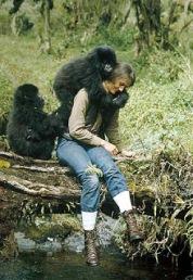Dian_Fossey_gorilas