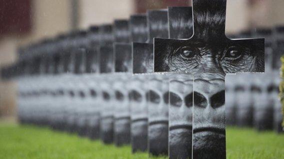 expo-gorilles-montier-01