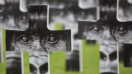 expo-gorilles-montier-02