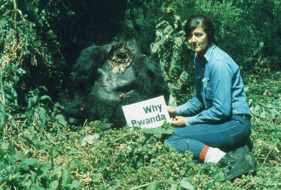 Photo Ian Redmond | by LastOfTheGreatApes Dian Fossey with Digit's body, Jan 1978.