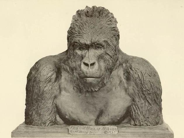 "English: ""The Old Man of Mikeno"", bronze Bust of a Mountain Gorilla, 1927, SourceTaxidermy and Sculpture. The work of Carl E. Akeley in Field Museus of Natural History, Chicago; taken from http://www.taxidermy4cash.com/chicago.html"