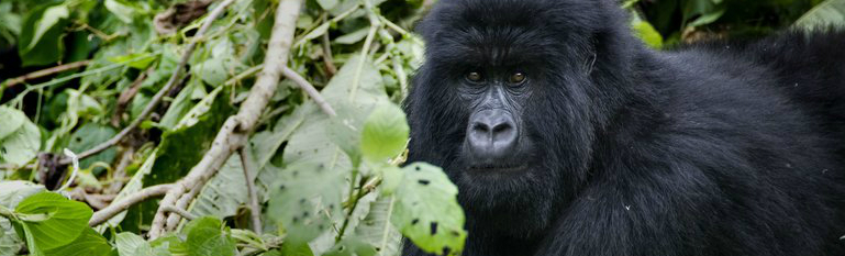Virunga_high-res_resize-FP