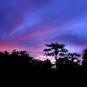 (c) Eric Lodde (UNESCO - OKapi Reserve)