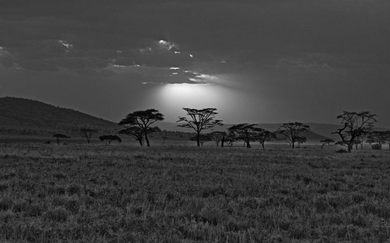 gray_africa_kenya_savannah_sunset_nature_hd-wallpaper-421863