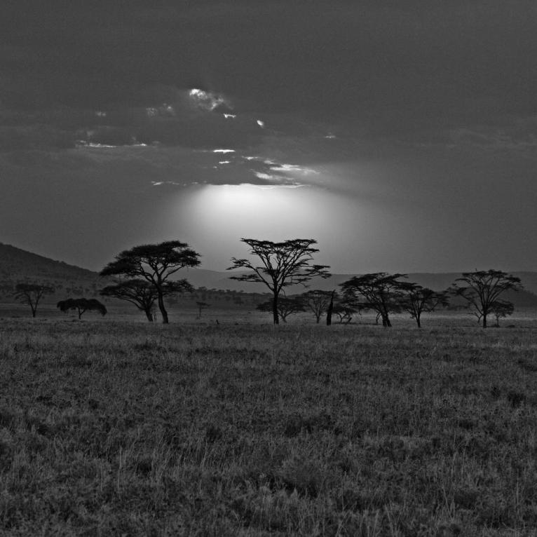 gray_africa_kenya_savannah_sunset_nature_hd-wallpaper-421863