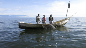 Cette photo a été prise sur le lac Edouard vers les eaux profondes de BHIRWA, une place au lac se trouvant en amont de la frayère de KYONDO(ou KABHALE en terme vulgaire)à une distance d'environ 2h du temps de Nyakakoma vers Vitshumbi. Photo prise par DANIEL Machozi lors d'une mission de terrain avant la dernière formation en photo et vidéo. Cette photo montre l'image des pêcheurs portant des imperméables en caoutchouc dans une pirogue sur le lac Edouard entrain de retirer leurs filets de pêche du lac tout en soutirant (enlevant) seulement les poissons capturés et réarrangeant les filets pour la prochaine utilisation. Cette pêche est surnommée en langue locale RWAKA pour la pêche des bargrus, où les pêcheurs retirent leurs filets du lac après la levée du soleil, le matin.En amont de la pirogue, est maintenu et attaché un stick d'arbre servant comme signal de leur présence aux autres pêcheurs qui démontrent de loin la place où ces derniers se retrouvent sur le lac et pour que les autres s'approchent auprès d'eux pour les venir en aide sous diverses formes, et selon le besoin éprouvé comme ils campent longuement sur le lac. Photo: Daniel Machozi Mupanza