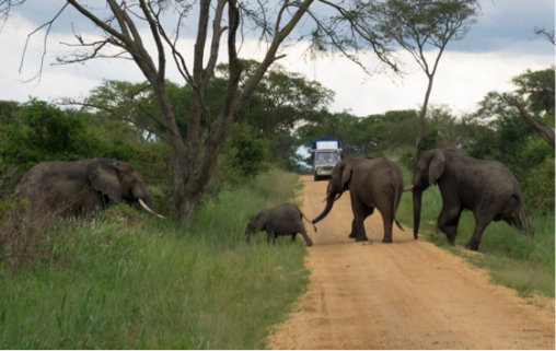 Queen Elizabeth National Park, part of the Greater Virunga Landscape, is home to African Elephants. © Global Witness