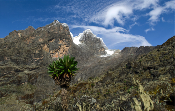 Rwenzori Mountains National Park. © istockphoto/guenterguni