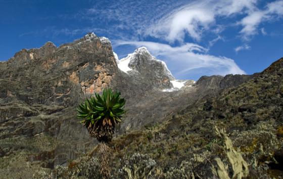 Rwenzori Mountains National Park. © istockphoto/guenterguni