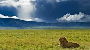 Serengeti - Ngorongoro