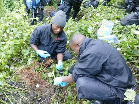 Fecal_collection_Bwindi_census_9-Mar-2018_WEckardt-1024x768