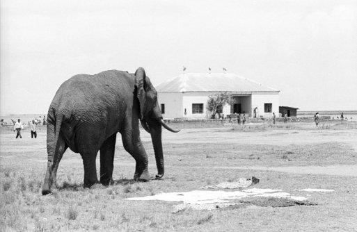 Elephants in Vitshumbi